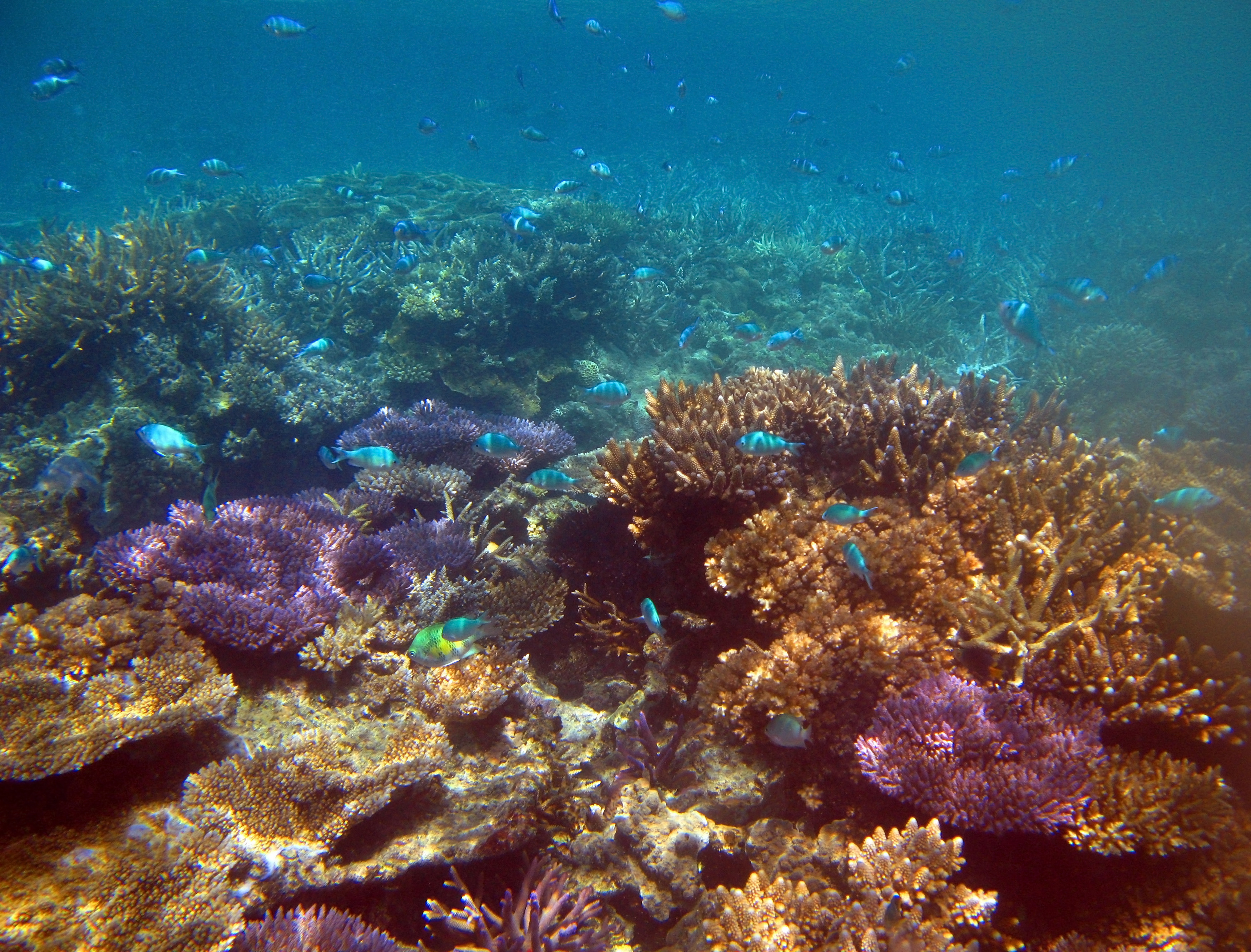 Free Stock image of Underwater Coral Reef with Several ...