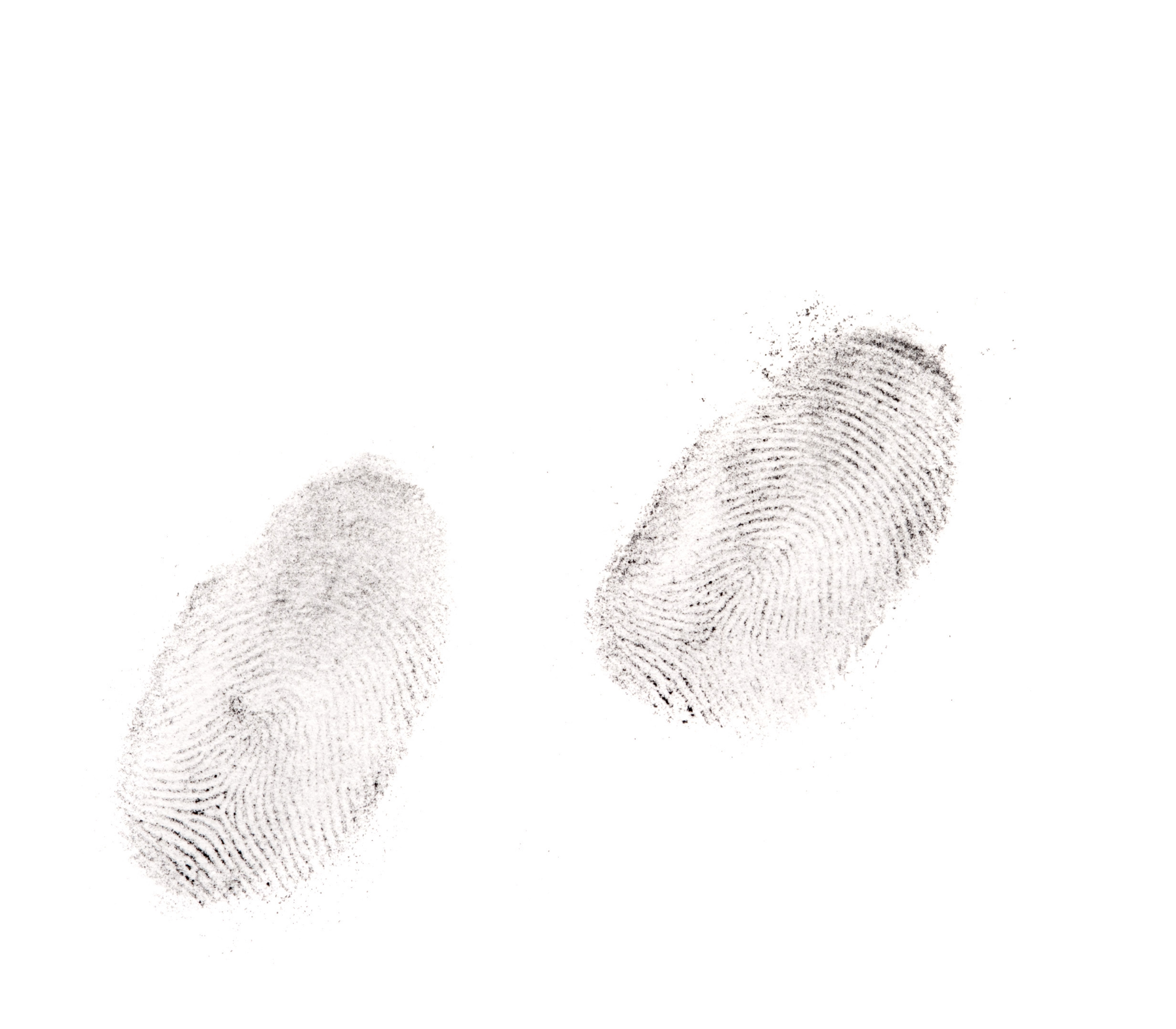 Two clear human fingerprints on a white background used to identify a person through the unique pattern of ridges and whorls for security or in a crime