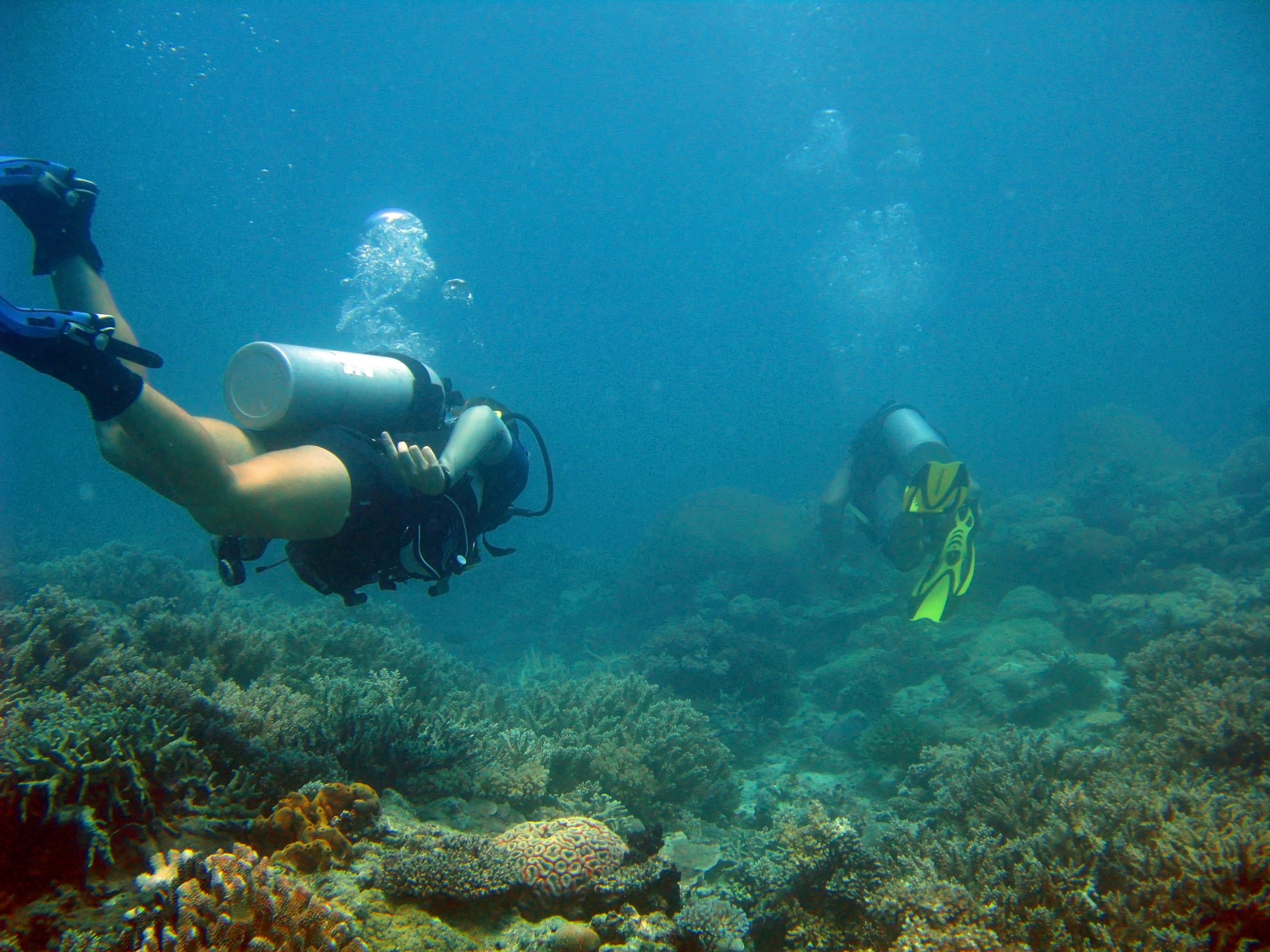 Two people scuba diving underwater on an offshore coral reef exploring the biodiversity of marine life